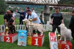 Zvornik - izložba pasa - pobjednički psi