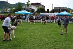 Зворник - изложба паса свих раса