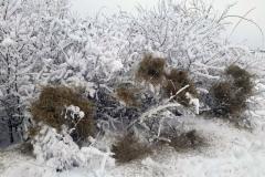 Сијено-за-срнећу-дивљач